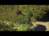 Ласточкино гнездо 4 серия